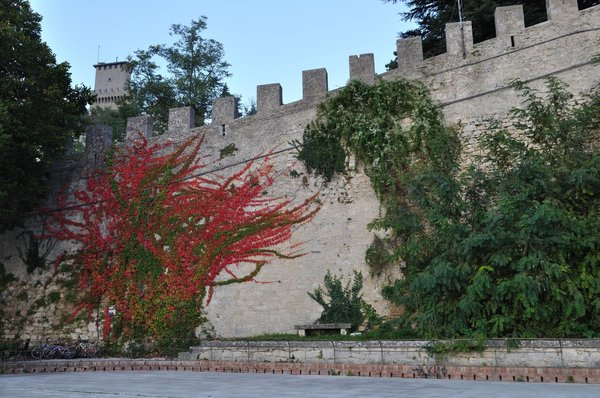 The vine of Canada on the castle wall in Northern Italy