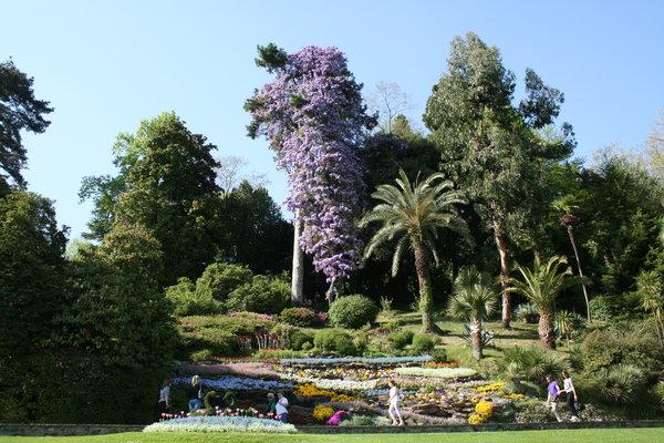 Gardens of villa Carlotta, blooming wisteria, Como lake, Tremezzo