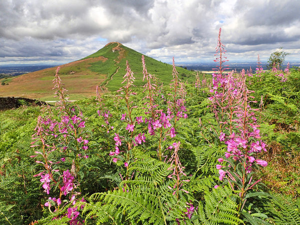 Top 10 Mountain Flowers To Discover